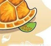 черепаха.jpgв.jpg
