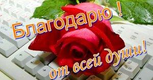 blagodaryu-ot-vsey-dushi-krasnaya-roza-na-klaviature-prekrasnyy-podarok-blagodarnosti-spasibo-bolyshoe-za-vse-149958.jpg