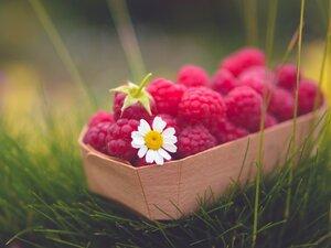 Raspberry-Basket-And-Daisy-800x600.jpg