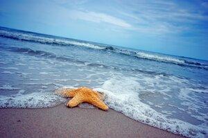 zvezda-starfish-summer-sand-more-pesok-sea-pliazh-beach.jpg