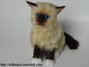ragdoll_kitten.jpg