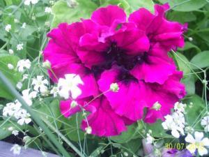post-19794-1290533057_thumb.jpg