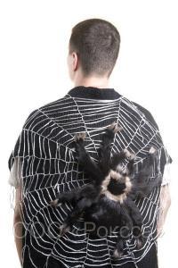 397855_w640_h640_knitwearspider.jpg