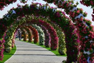 Dubai_Miracle_Garden_13.jpg