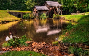 Rivers_Geese_Grass_Watermill_566707_2560x1600.jpg