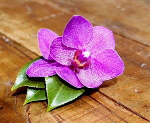 oboi_na_stol.com_191950_cvety_cvetok_orhideya_rozovyy_doski.jpg