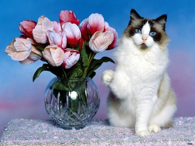 красивые картинки с цветами розами