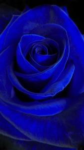 blue_velvet_wallpaper_2048x1152.jpg
