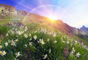 depositphotos_90365710_stock_photo_spring_flowers_daffodils.jpg