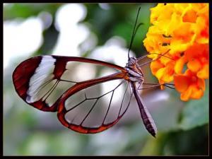 flowers_butterfly_yellow.jpg
