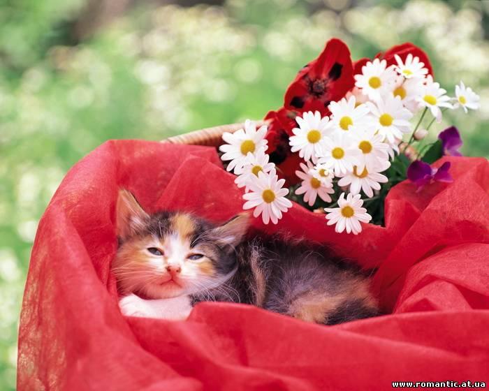 котенок корзина ромашки kitten basket chamomile бесплатно