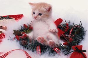1221333221_cats_041.jpg