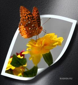 post-9294-1254836098_thumb.jpg